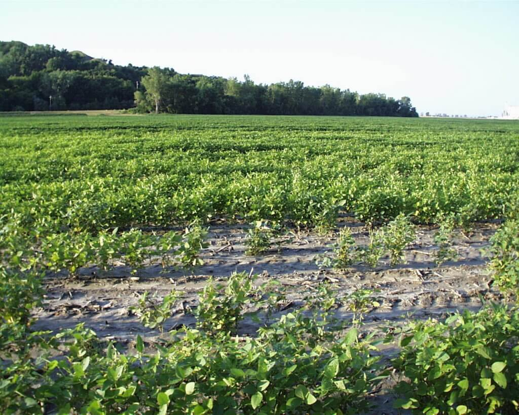 scn resistant variety damaged scn south council bluffs