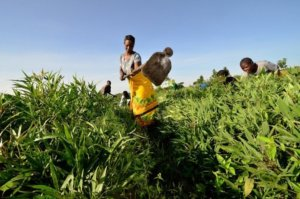 smallholder farmer in east africa x