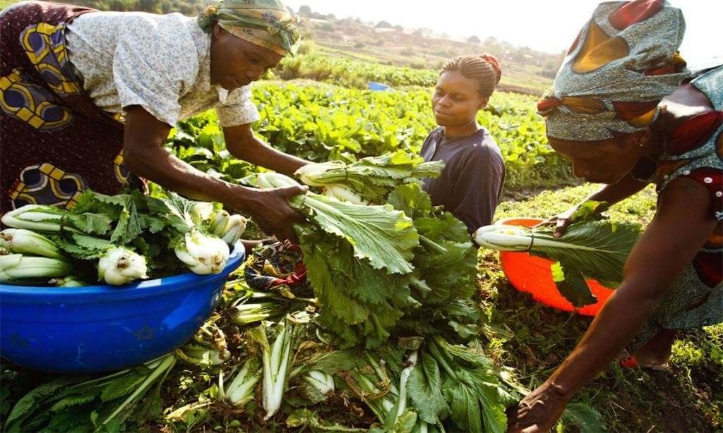 africa agriculture wikimedia commons