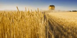 agamerica ag lending durum wheat