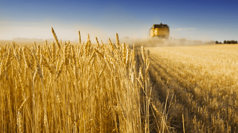 agamerica ag lending durum wheat