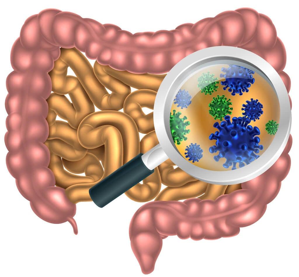 bacteria gut