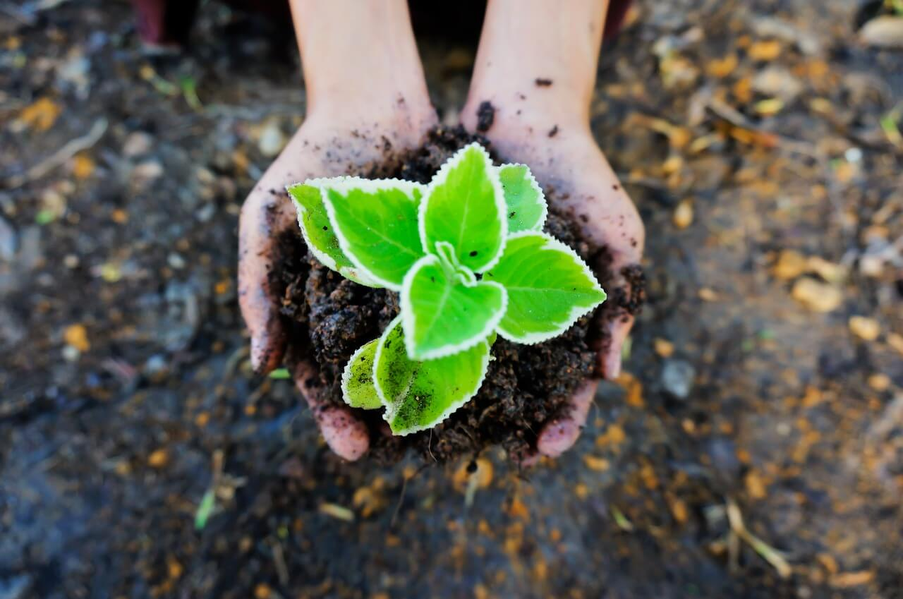 Regenerative agriculture boosts soil health but unlikely to slow climate change, report shows