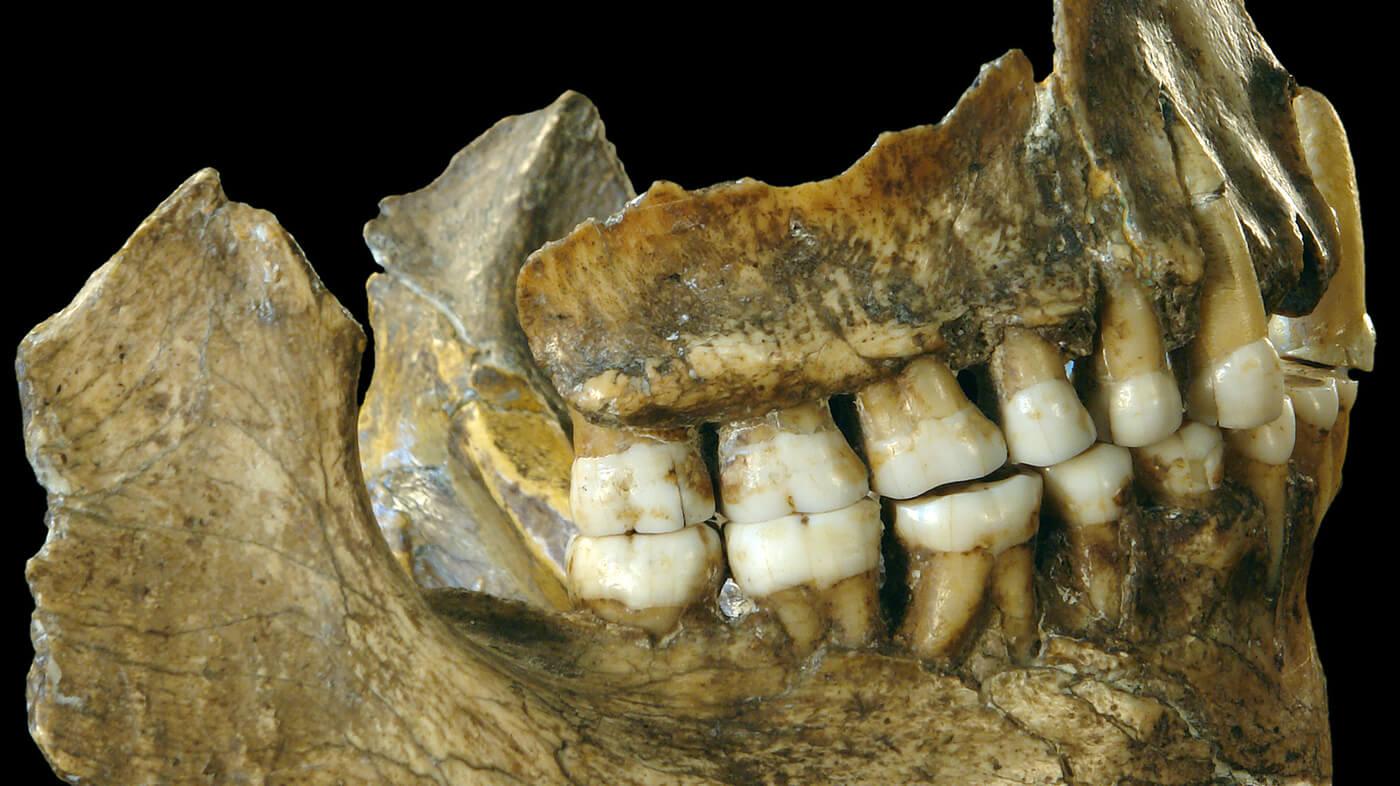 5-19-2019 py ii teeth wide df c bdb b ab f c ca a f