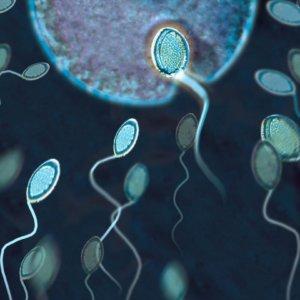 pill-men-fertility-male-levels-sperm-hormone-trials-counts-expect-scally-porn