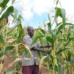 ugandafarming