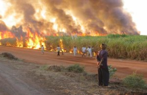 cane burning in a big sugar estate in sudan north east africa png