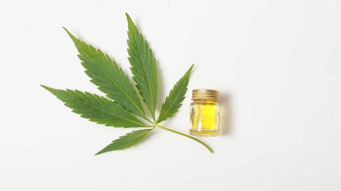 cbd oil cannabis leaf x