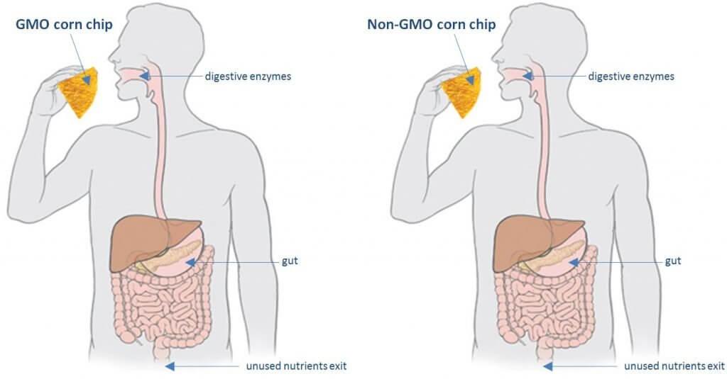 gmo chip jpg x