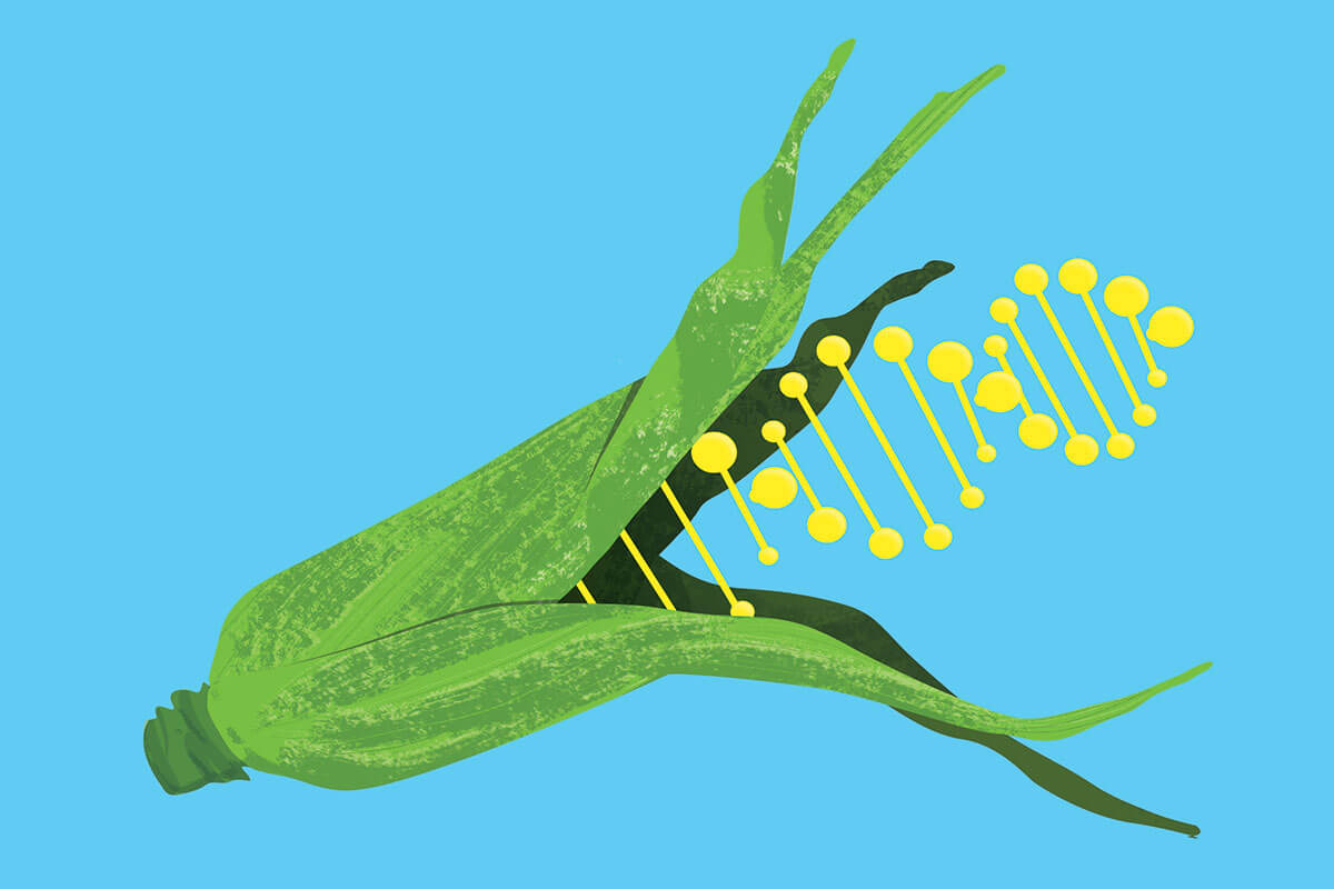genetically modify food debate