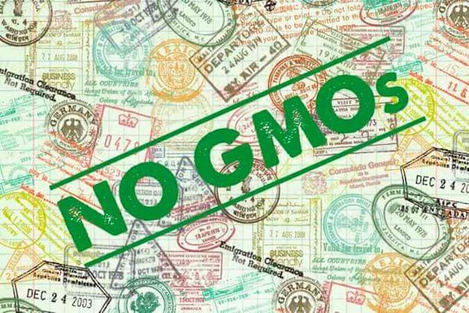 gmos in the eu