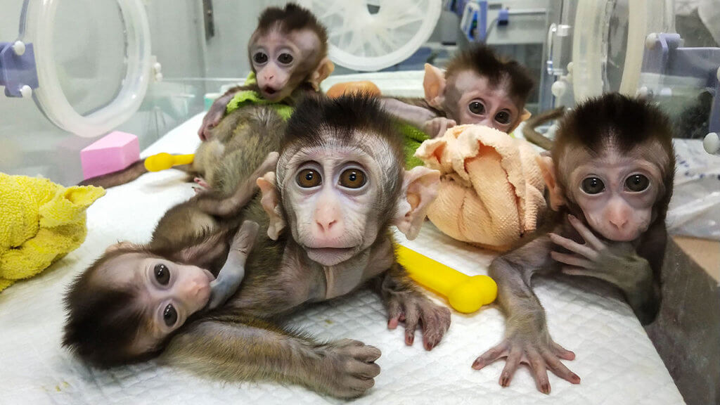 ma crispr animal monkeys x