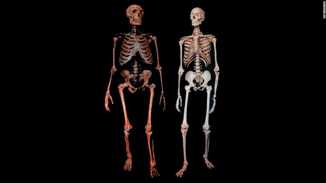 ancient finds neanderthal skeletons super