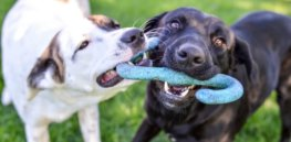 dog friendly dog breeds