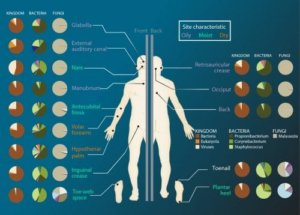 microbiome sites x