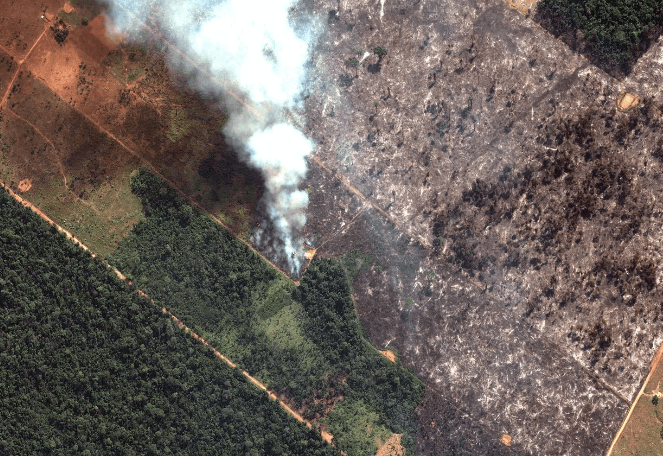 screenshot amazon rainforest fires indigenous tribal lands are burning here s how to help