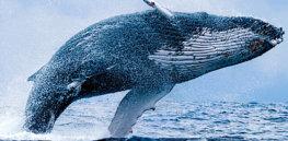 fcc d d f b d cf de whale