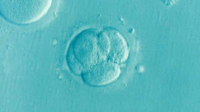gene involved in embryo development identified using crisprcas