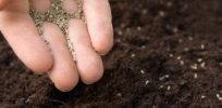 planting gmo seeds x
