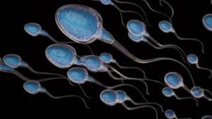 shutterstock sperm