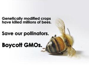 bees gmos