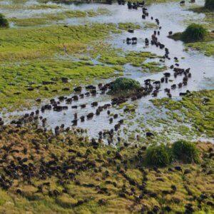 botswana duba plains camp aerial view of landscape wildebeest migrating safari destinations
