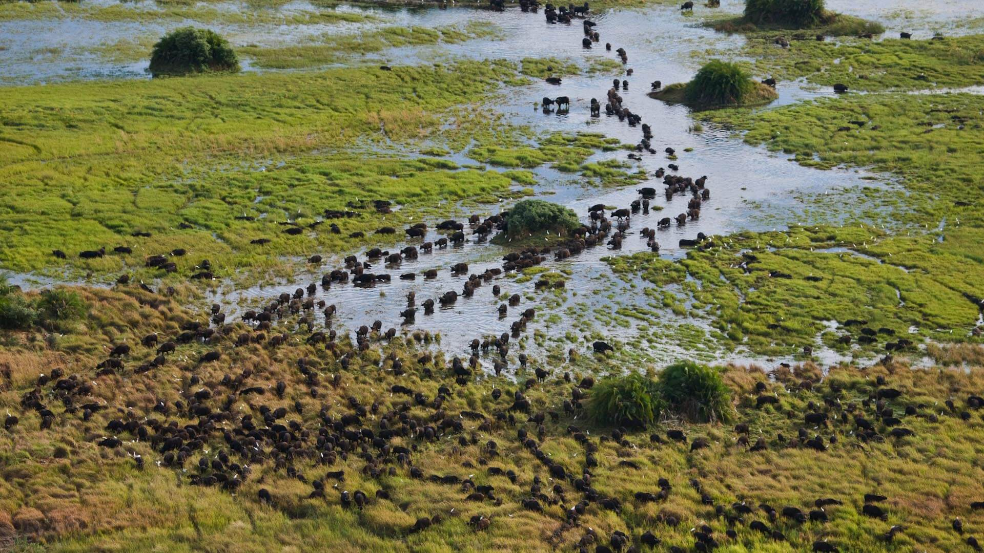 botswana duba plains camp aerial view of landscape wildebeest migrating safari destinations