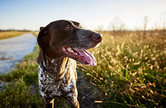img article head dog risk lyme disease