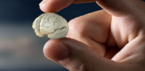 scientists test the effects of psychedelic drugs on lab grown brains