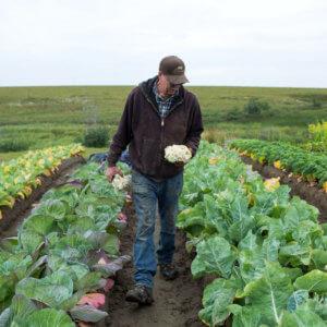 tundra farmer custom a c dfec c f ff ed b c s c
