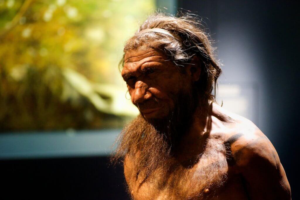 neanderthalnhm paulhudsonccby