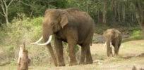 asian elephant priya davidar jean philippe puyravaud mykax cac qv lu