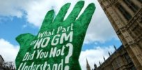 large gm crops europe x