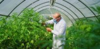 scientist in greenhouse adobe stock credit hquality resized