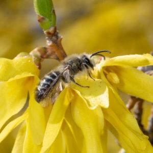 unequal cellophane bee kpmcfarland