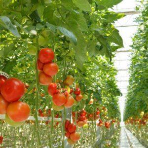 vertical farming x