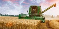 wheatfarmer lead