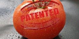 large pomodoro