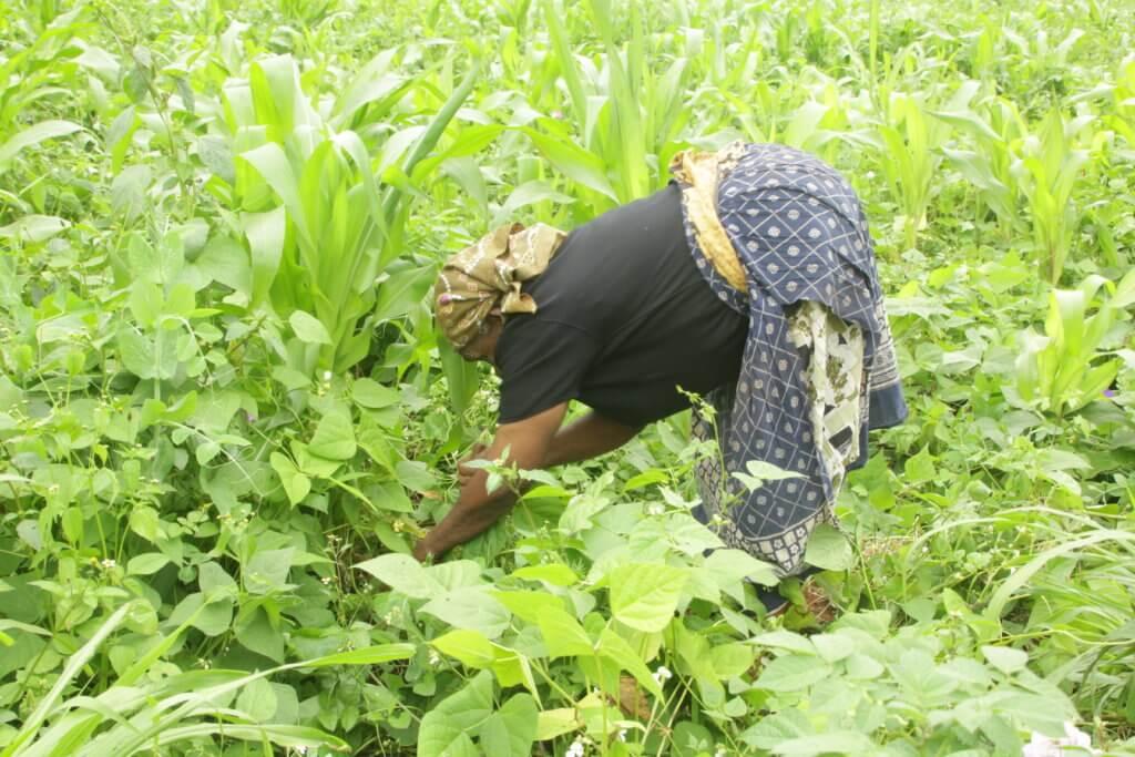 wambui weeding