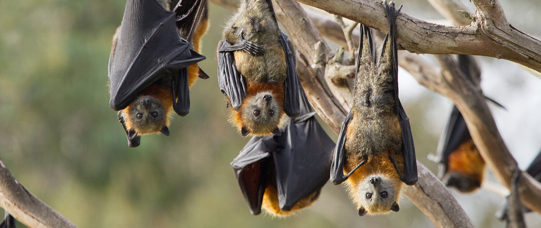 bats cv x jpg