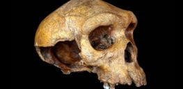 bb skull feat x