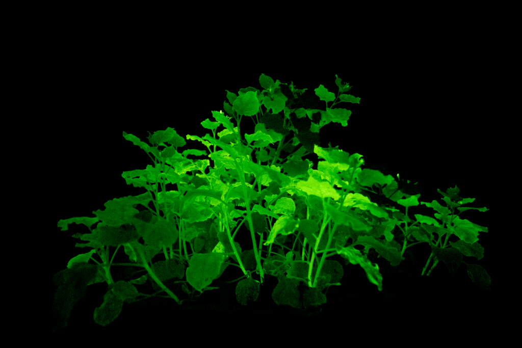 glowing plants side view