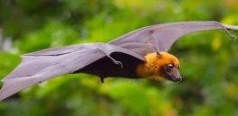 pest library bats