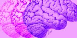 brain topper