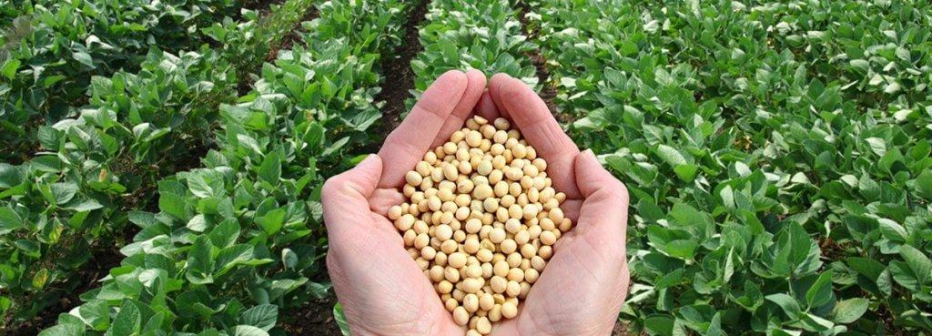 gmo farming food
