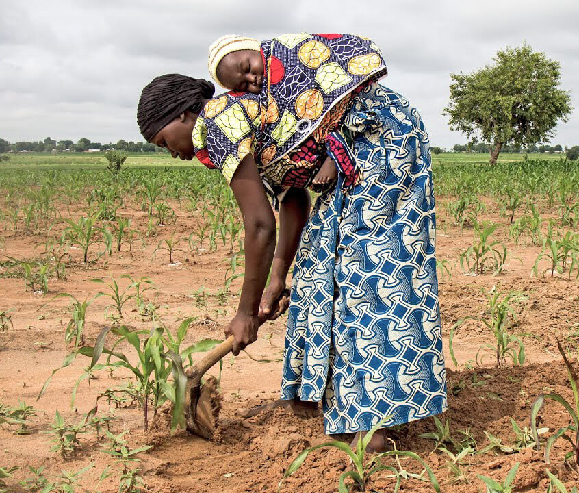 Rescuing Africa's staple orphan crops—sorghum, millet, cowpea, cassava and sweat potato—with biotechnology could help feed millions of people