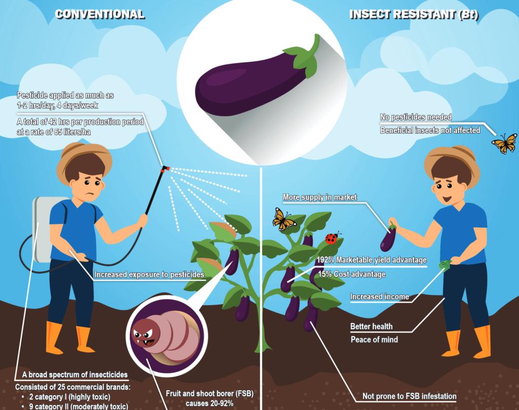 screenshot which eggplant will you choose pdf
