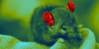 gene therapy deafness mice