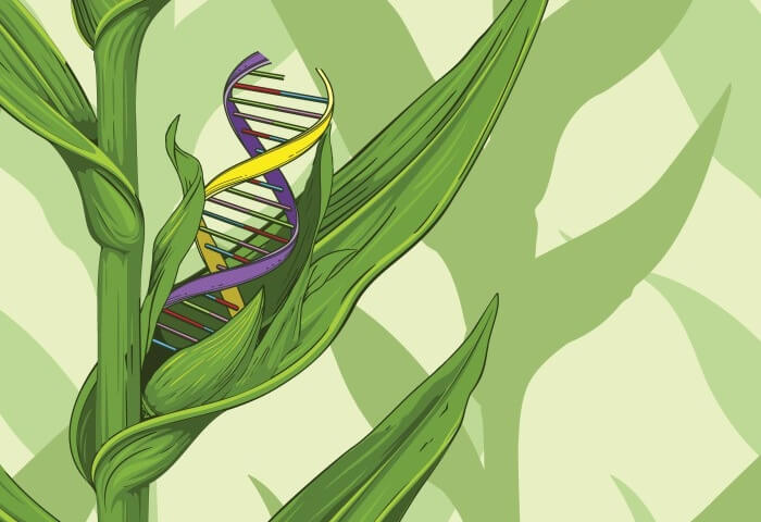 Viewpoint: Calling gene-edited crops 'natural' won't dispel public skepticism. Here's a better way to build trust in CRISPR