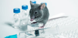 common food additive may weaken flu vaccine as seen in mouse models